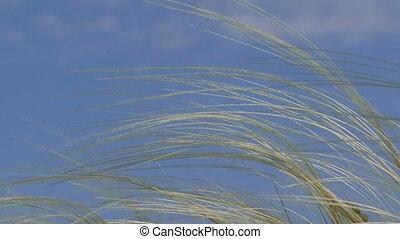 Wind in a field