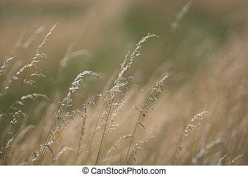 wind in grass