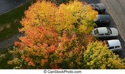 wind in the autumn tree and cars