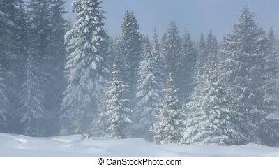 Wind in winter forest
