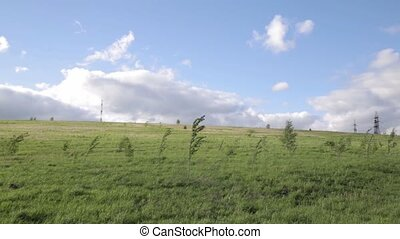 wind is swings a small tree in the field on a sky background