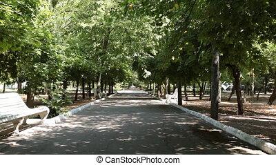 wind., mouvementde va-et-vient, feuilles, ruelle, blanc, bancs