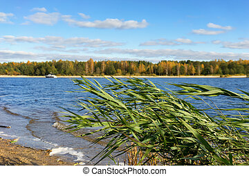 Wind on the banks of the river in autumn