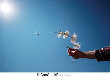 wind, paardenbloem, zaden, vliegen