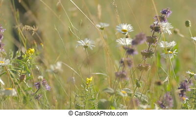 Wind playing with wildflowers in th