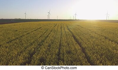 Wind-Powered Electrical Generators at Rapeseed Field. Aerial...