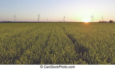 Wind-Powered Electrical Generators at Rapeseed Field. Aerial...