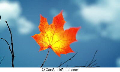 Wind Rips Last Maple Leaf From Branch And Carries It Into Blue Sky. 3D Animation. 4K. 3840x2160.