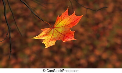 Wind Rips Last Maple Leaf From Branch And Carries It Into The Sky. 3D Animation. 4K. 3840x2160.