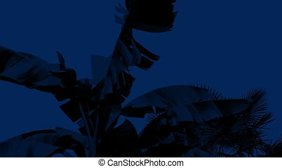 Wind Rocking Palm Tree At Night - Palm tree rocked by...