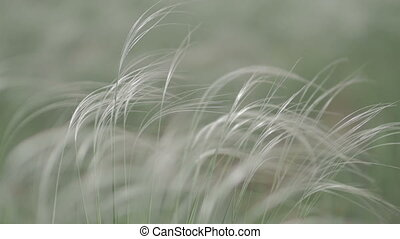 wind rustles the grass in field green background macro close up ungraded flat color
