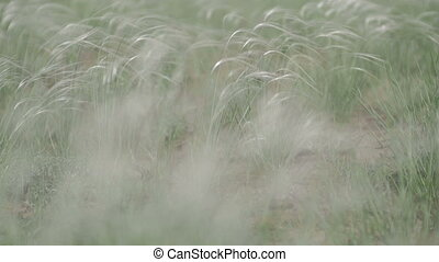 wind rustles the grass in field green background macro ungraded flat color