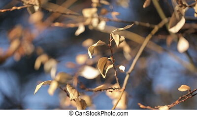 wind rustling yellow leaves trees in autumn outdoors close up shooting