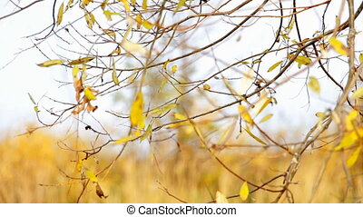 Wind shakes Autumn yellow leaves