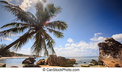 Wind Shakes Palm Branches Bent over Rocky Beach Against Sea...