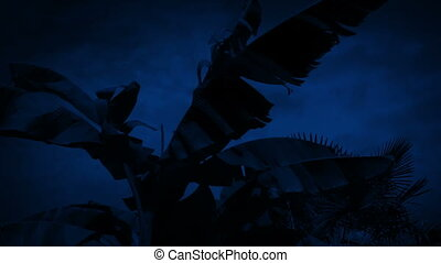 Wind Shakes Palm Tree At Night - Strong winds shaking palm...
