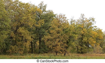 Wind shakes the branches of the trees in the autumn forest