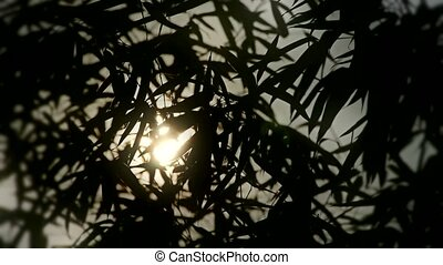wind shaking bamboo