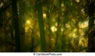 wind shaking bamboo,quiet atmosphere in sunshine,Hazy style.