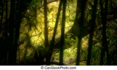 wind shaking bamboo,Trunk,branches