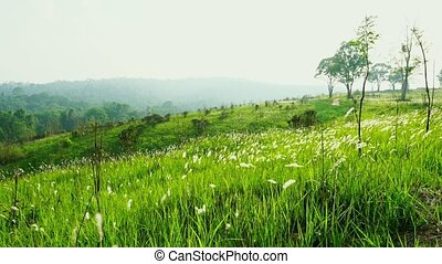 Wind slow blowing green grass field and white flowers and...