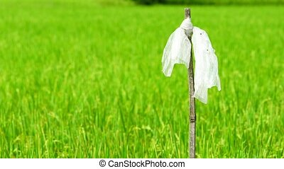 Wind slow blowing plastic bag on dry bamboo pole to chasing...