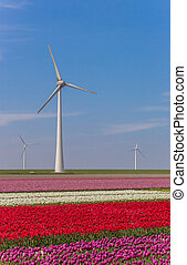 Wind turbine and a field of colorful tulips in Noordoostpolder