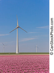 Wind turbine and a field of pink tulips in Noordoostpolder