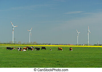 Wind turbine and cows 01
