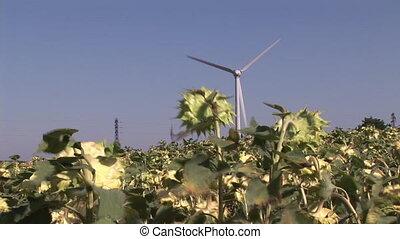 Wind-Turbine - Wind Turbine in a field of Sunflowers
