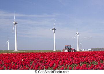 wind turbines against blue sky and red tulip field in holland plus tractor