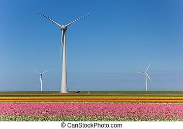 Wind turbines and a field of pink tulips in Noordoostpolder