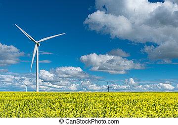 Wind turbines in a canola field in bloom