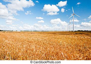 wind turbines in wheat field