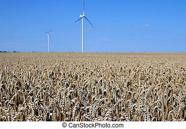 wind turbines on wheat field renewable energy summer season