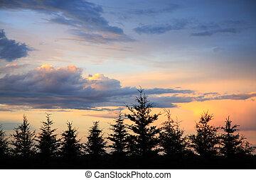 Windbreak Sunset