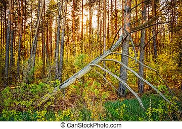 windfall, em, forest., tempestade, damage., árvore caída