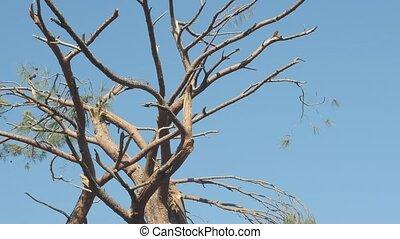 Windfall in forest. Storm damage. Broken tree on blue sky ...