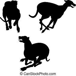 windhund, silhouetten, rennsport