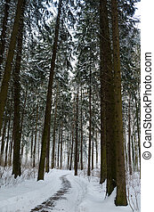Winding alley in the winter forest