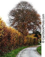 Winding Autumn Lane
