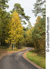 Winding country road in a colorful forest