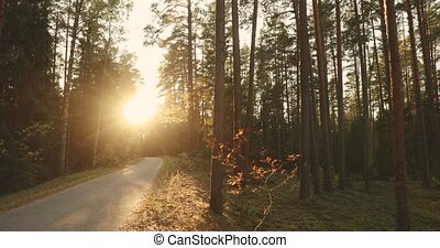 Winding Countryside Road Path Walkway Through Autumn Forest. Sunset Sunrise. Nobody. Road Turns To Fall Rising Sun.
