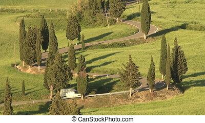 Winding Cypress Lane