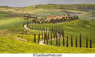 Meandering row of cypress trees in the hills of Tuscany, Italy, April.