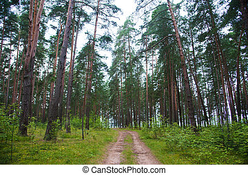 Winding dirt road through the forest