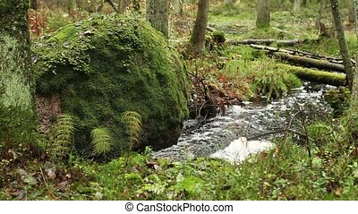 winding forest stream wild nature - winding forest stream, a...