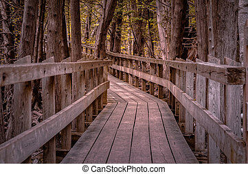 Winding forest wooden path walkway through wetlands, ontario, canada, crawford lake, autumn fall