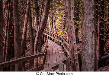Winding forest wooden path walkway through wetlands, ontario, canada, crawford lake autumn, fall