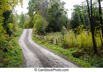 Winding gravel road in a deciduous forest by fall season